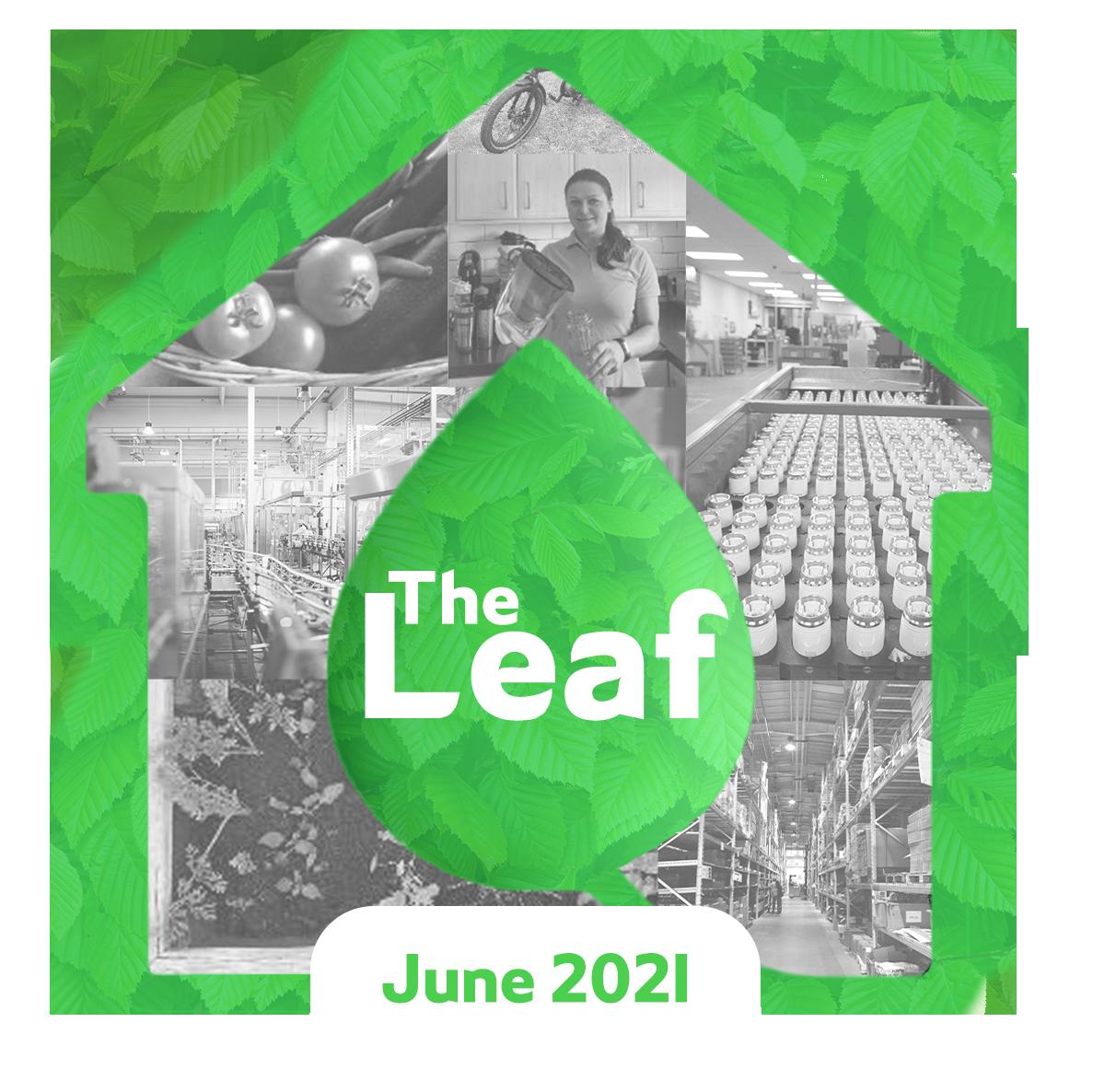 corporate_sustainability_blog_drayton_the_leaf